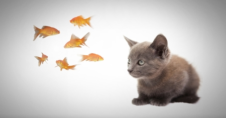 girl mouth open: Digital composite of Kitten watching fish Stock Photo