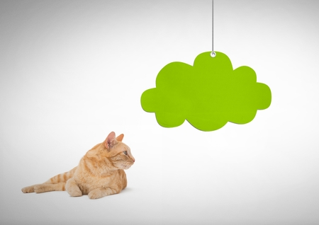 Digital composite of Cat looking right with green cloud hanging