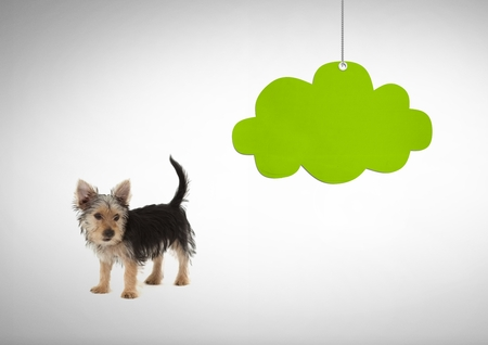 Digital composite of Dog looking right with green cloud hanging