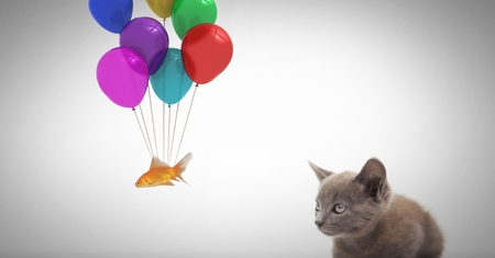 floating: Digital composite of Kitten watching fish tied to balloons