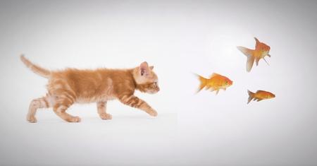 Digital composite of Kitten following fish