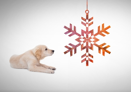Digital composite of Dog looking right with snowflake decoration