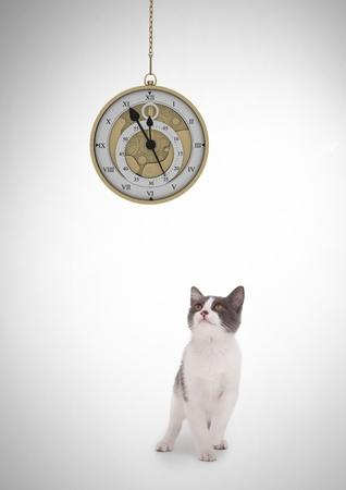 Digital composite of Cat watching clock hanging Stock Photo