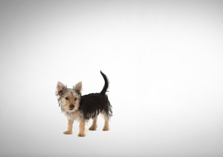 Digital composite of Dog standing in blank space