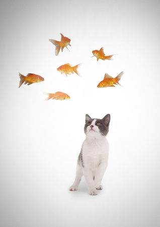 Digital composite of Cat watching fish