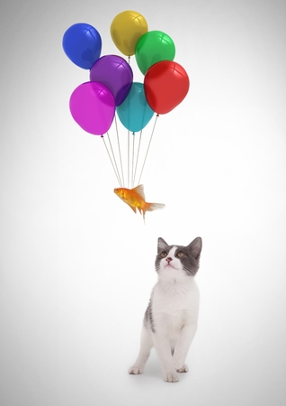 floating: Digital composite of Cat watching fish floating tied to balloons
