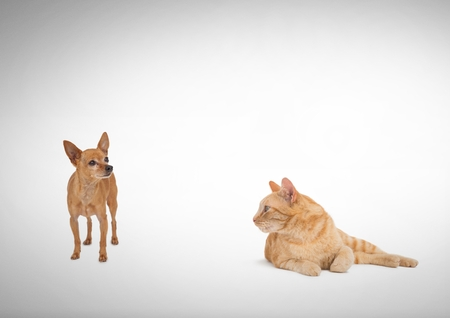 Digital composite of Cat looking at dog