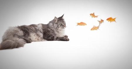 Digital composite of Cat watching fish Stock Photo - 88541616