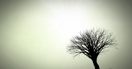 Digital composite of Bare tree silhouette