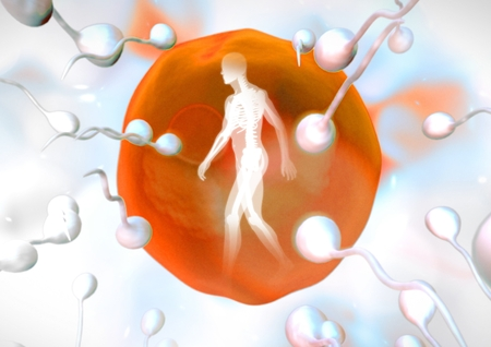 Digital composite of Sperm reproduction ovary with human