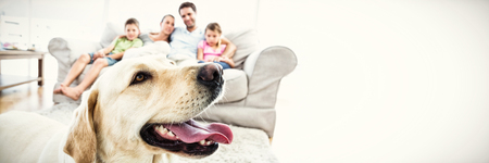 Happy family sitting on couch with their pet yellow labrador in foreground at home in the living room Banque d'images