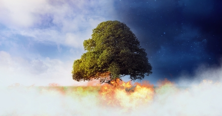 Digital composite of Tree with burning fire and night and day