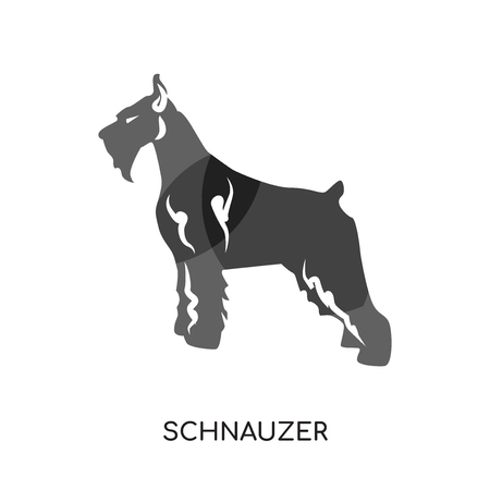 Schnauzer isolated on white background for your web and mobile app design.