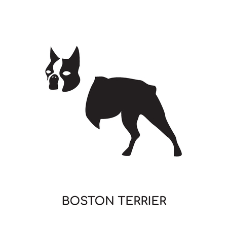boston terrier logo isolated on white background for your web and mobile app design , colorful vector icon, brand sign & symbol for your business
