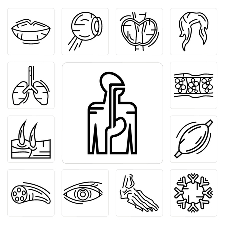 Set of Digestive System, Immune Foot Bones, Human Eye, Muscle Fiber, Muscle, Men Knee, Cellulite, Lungs icons Illustration