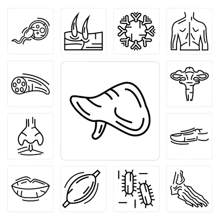 Set Of 13 simple editable icons such as Human Liver, Foot Bones, Three Bacteria, Muscle, Lips, Toe, Nostril, Uterus, Muscle Fiber can be used for mobile, web UI