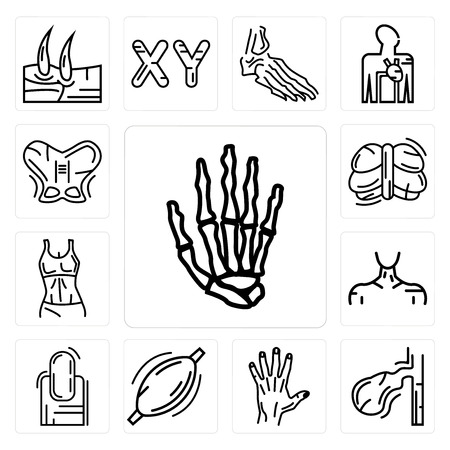 Set Of 13 simple editable icons such as Hand Bones, Gallbladder, Men Hand, Human Muscle, Long Nail, Neck, Female Trunk, Cerebellum, Hip can be used for mobile, web UI Ilustração