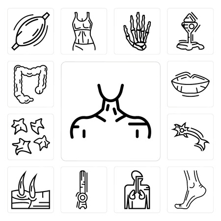 Set Of 13 simple editable icons such as Human Neck, Buttocks, Respiratory System, Rod Cell, Men Knee, Neuron, Platelets, Lips, Large Intestine can be used for mobile, web UI