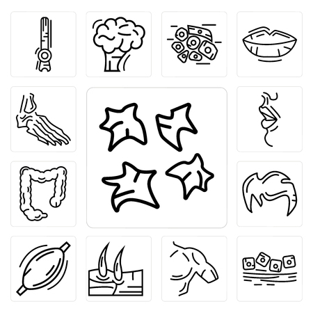 Set Of 13 simple editable icons such as Platelets, Mucous Membrane, Men Shoulder, Knee, Human Muscle, Hair, Large Intestine, Big Lips, Foot Bones can be used for mobile, web UI