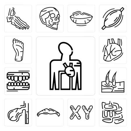 Set Of 13 simple editable icons such as Blood Supply System, Small Intestine, Masculine Chromosomes, Big Moustache, Gallbladder, Men Knee, Human Teeth, Heart can be used for mobile, web UI