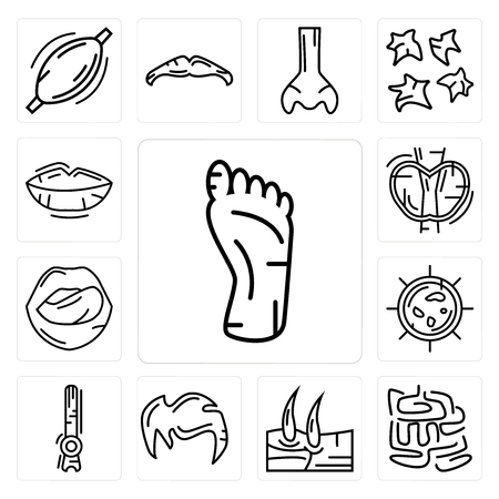 Set Of 13 simple editable icons such as Human Foot, Small Intestine, Men Knee, Hair, Rod Cell, Big Cellule, Tongue and Mouth, Thyroid, Lips can be used for mobile, web UI