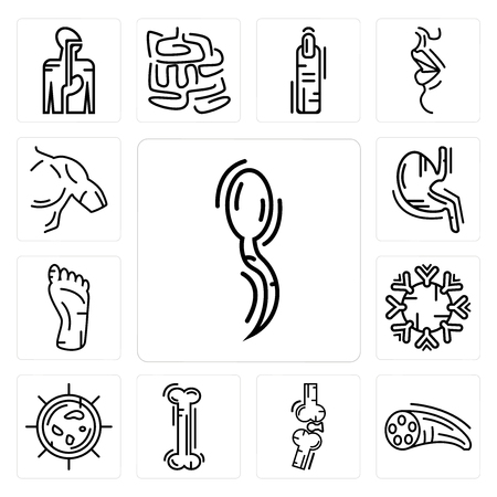 Set Of 13 simple editable icons such as Two Spermatozoon, Muscle Fiber, Bones Joint, Human Bone, Big Cellule, Immune System, Foot, Stomach with Liquids can be used for mobile, web UI