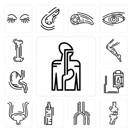 Set Of 13 simple editable icons such as Digestive System, Bones Joint, Human Artery, Finger, Bladder, Blood Transfusion, Stomach with Liquids, Men Leg, Bone can be used for mobile, web UI