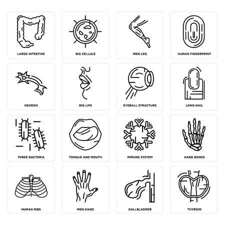 Set Of 16 simple editable icons such as Thyroid, Gallbladder, Men Hand, Human Ribs, Hand Bones, Large Intestine, Neuron, Three Bacteria, Eyeball Structure can be used for mobile, web UI Illustration