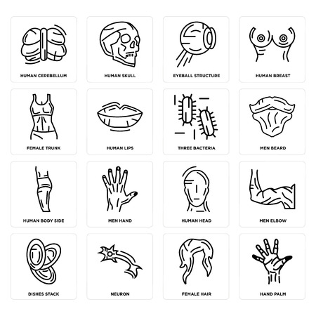Set Of 16 simple editable icons such as Hand Palm, Female Hair, Neuron, Dishes Stack, Men Elbow, Human Cerebellum, Trunk, Body Side, Three Bacteria can be used for mobile, web UI