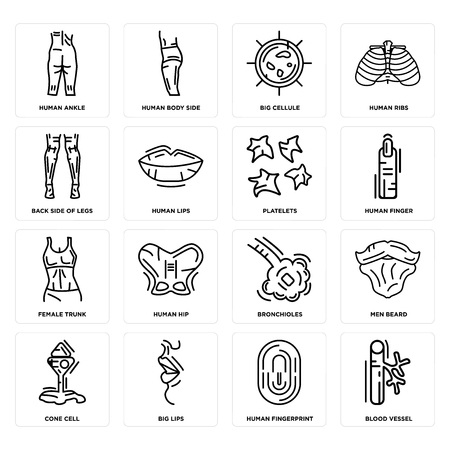 Set Of 16 simple editable icons such as Blood Vessel, Human Fingerprint, Big Lips, Cone Cell, Men Beard, Ankle, Back Side Legs, Female Trunk, Platelets can be used for mobile, web UI