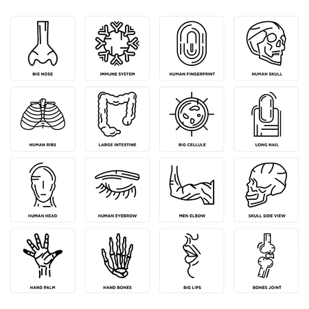 Set Of 16 simple editable icons such as Bones Joint, Big Lips, Hand Bones, Palm, Skull Side View, Nose, Human Ribs, Head, Cellule can be used for mobile, web UI