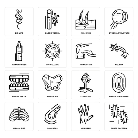 Set Of 16 simple editable icons such as Three Bacteria, Men Hand, Pancreas, Human Ribs, Fingerprint, Big Lips, Finger, Teeth, Skin can be used for mobile, web UI