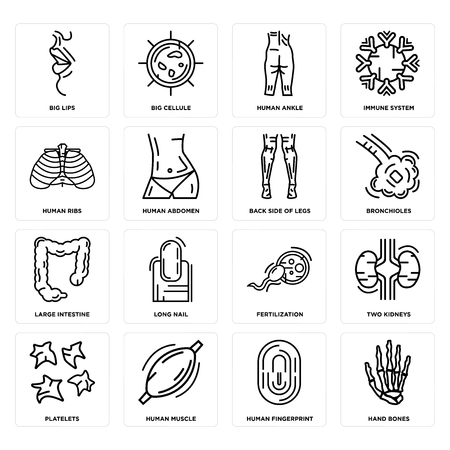 Set Of 16 simple editable icons such as Hand Bones, Human Fingerprint, Muscle, Platelets, Two Kidneys, Big Lips, Ribs, Large Intestine, Back Side Legs can be used for mobile, web UI