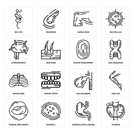 Set Of 16 simple editable icons such as Thyroid, Stomach with Liquids, Basophil, Tongue and Mouth, Men Leg, Big Lips, Lymphonodus, Human Ribs, Fingerprint can be used for mobile, web UI
