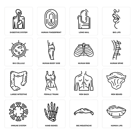 Set Of 16 simple editable icons such as Human Lips, Big Moustache, Hand Bones, Immune System, Men Beard, Digestive Cellule, Large Intestine, Ribs can be used for mobile, web UI