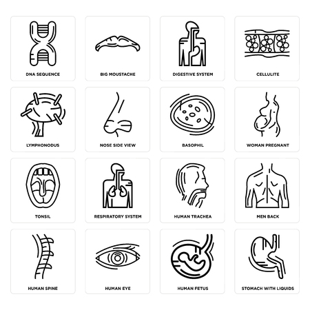 Set Of 16 simple editable icons such as Stomach with Liquids, Human Fetus, Eye, Spine, Men Back, DNA Sequence, Lymphonodus, Tonsil, Basophil can be used for mobile, web UI