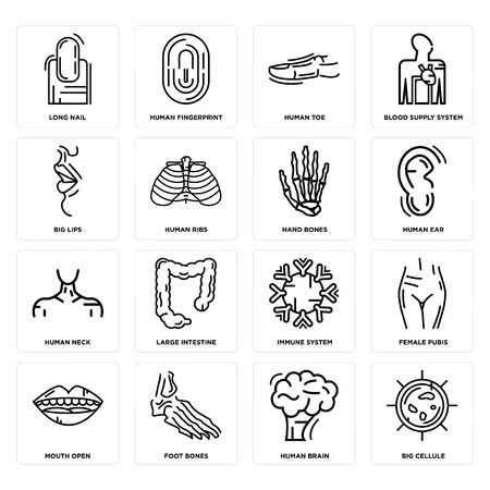 Set Of 16 simple editable icons such as Big Cellule, Human Brain, Foot Bones, Mouth Open, Female Pubis, Long Nail, Lips, Neck, Hand Bones can be used for mobile, web UI
