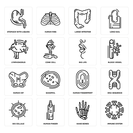Set Of 16 simple editable icons such as Immune System, Hand Bones, Human Finger, Big Cellule, DNA Sequence, Stomach with Liquids, Lymphonodus, Hip, Lips can be used for mobile, web UI