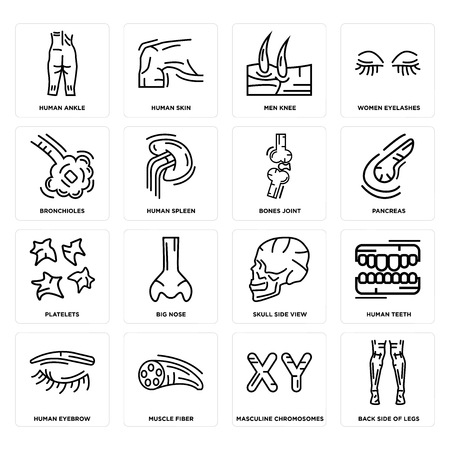 Set Of 16 simple editable icons such as Back Side Legs, Masculine Chromosomes, Human Ankle, Eyebrow, Teeth, Skull View, Big Nose, Skin can be used for mobile, web UI