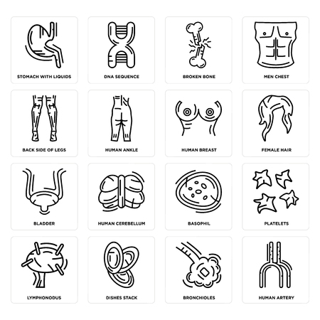 Set Of 16 simple editable icons such as Human Artery, Bronchioles, Dishes Stack, Lymphonodus, Platelets, Stomach with Liquids, Back Side Legs, Bladder, Breast can be used for mobile, web UI