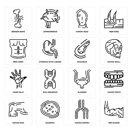 Set Of 16 simple editable icons such as Men Elbow, Human Artery, Basophil, Skin, Teeth, Broken Bone, Chest, Hand Palm, Pancreas can be used for mobile, web UI