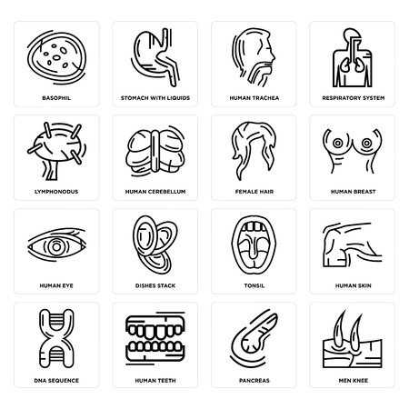 Set Of 16 simple editable icons such as Men Knee, Pancreas, Human Teeth, DNA Sequence, Skin, Basophil, Lymphonodus, Eye, Female Hair can be used for mobile, web UI
