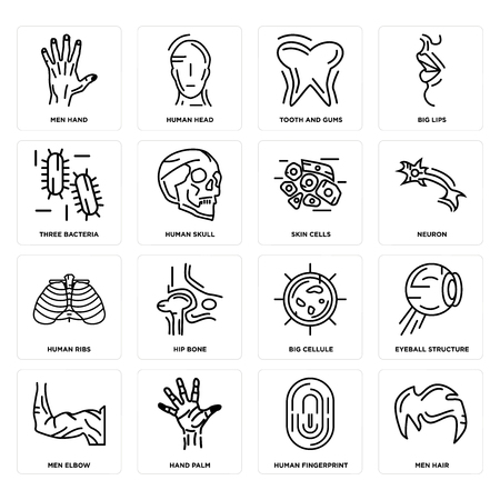 Set Of 16 simple editable icons such as Men Hair, Human Fingerprint, Hand Palm, Elbow, Eyeball Structure, Hand, Three Bacteria, Ribs, Skin Cells can be used for mobile, web UI Ilustração