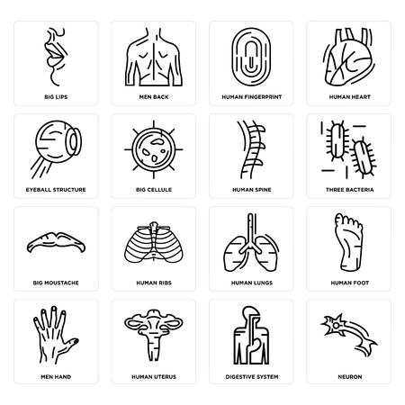 Set Of 16 simple editable icons such as Neuron, Digestive System, Human Uterus, Men Hand, Foot, Big Lips, Eyeball Structure, Moustache, Spine can be used for mobile, web UI Ilustração