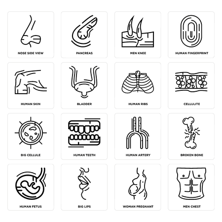 Set Of 16 simple editable icons such as Men Chest, Woman Pregnant, Big Lips, Human Fetus, Broken Bone, Nose Side View, Skin, Cellule, Ribs can be used for mobile, web UI