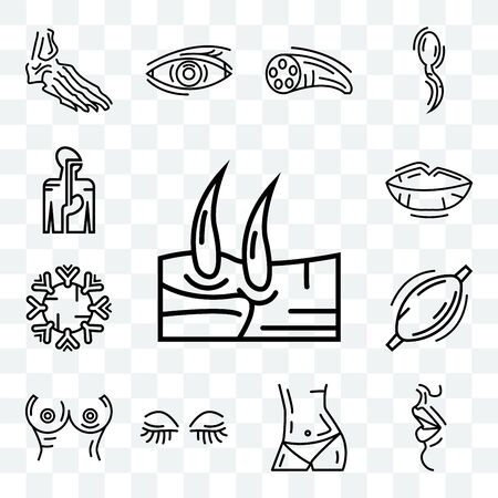 Set Of 13 transparent editable icons such as Men Knee, Big Lips, Human Abdomen, Women Eyelashes, Breast, Muscle, Immune System, Digestive web ui icon pack