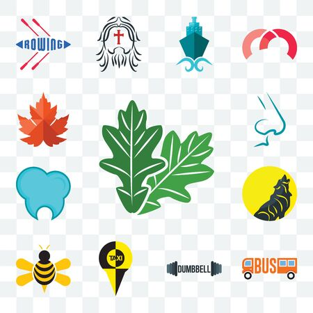 Set Of 13 transparent editable icons such as oak leaf, dumbbell, honey bee, dental clinic, nose, maple web ui icon pack