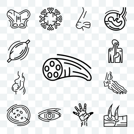 Set Of 13 transparent editable icons such as Muscle Fiber, Men Knee, Hand Palm, , Basophil, Foot Bones, Woman Pregnant, Digestive System, Human Muscle, web ui icon pack Illustration