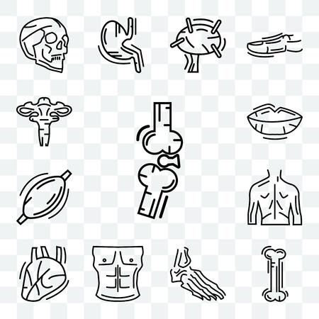 Set Of 13 transparent editable icons such as Bones Joint, Human Bone, Foot Bones, Men Chest, Heart, Back, Muscle, Lips, Uterus, web ui icon pack Vektoros illusztráció