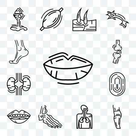 Set Of 13 transparent icons such as Human Lips, Body Side, Respiratory System, Foot Bones, Mouth Open, Fingerprint, Two Kidneys, Bones Joint, web ui editable icon pack, transparency set